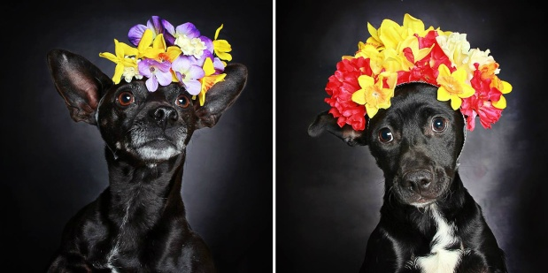 black-dog-portraits-guinnevere-shuster